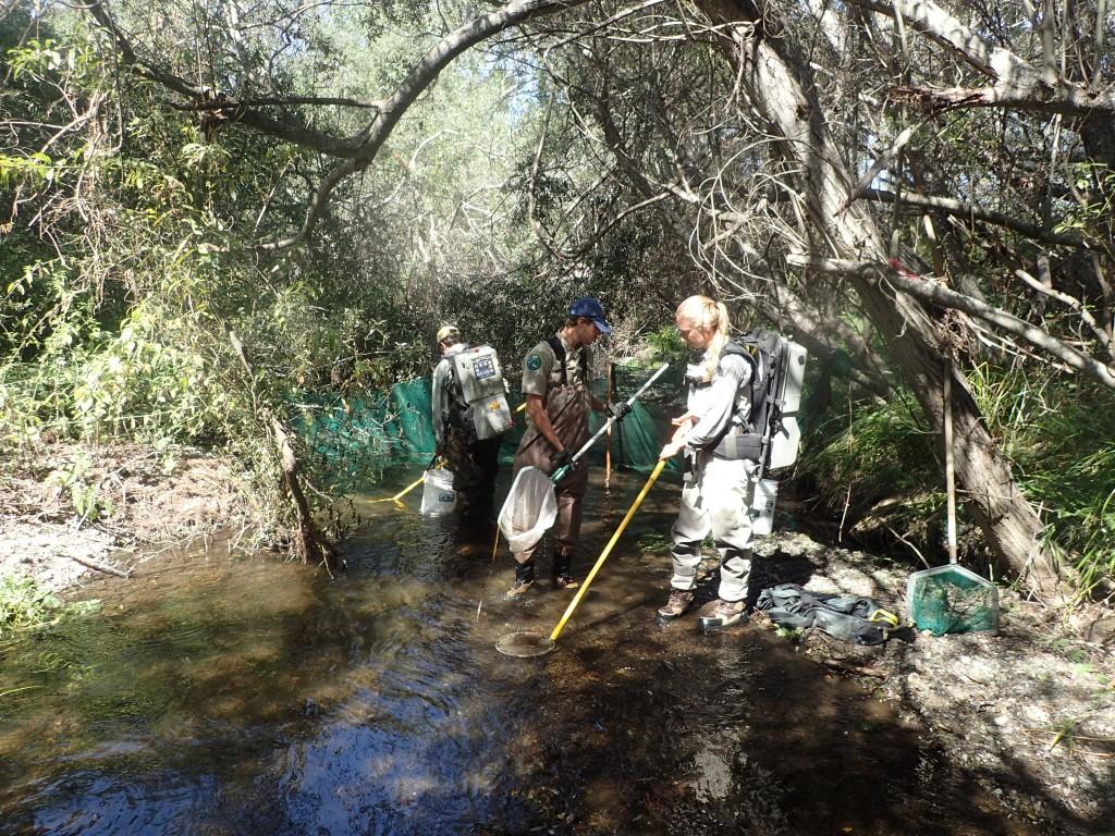 Electrofishing equipment is used to sample for fish along Chorro Creek.