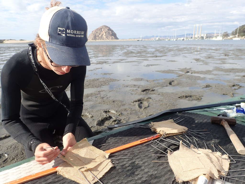 Paddleboards make for great mobile desks for eelgrass work. Field technician Kelley gets the burlap sacks ready for planting.