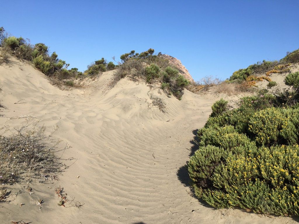 This windblown path wends its way through the dunes.