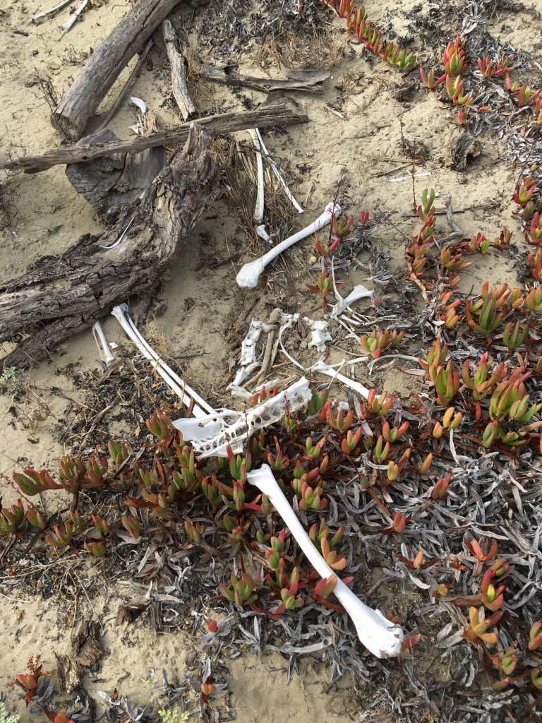 You might find bones, shells, and other natural treasures along your sandspit hike. Please leave them there for the next adventurer to admire.