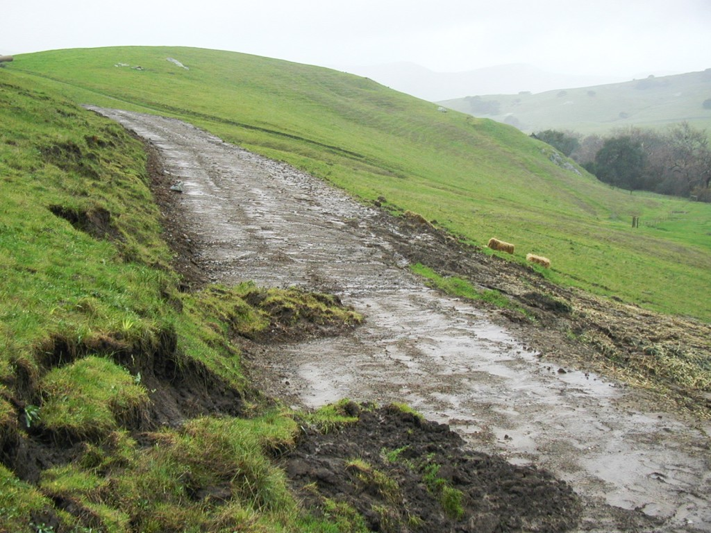 In the photograph above, sediment erodes from a dirt road during a rainstorm. This sediment can enter streams and end up in the bay.
