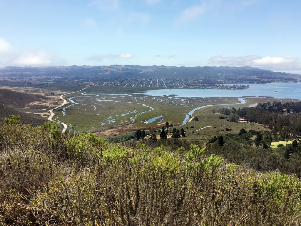 View of the Morro Bay estuary channels and bay from Black Hill. You can see various plant communities here.