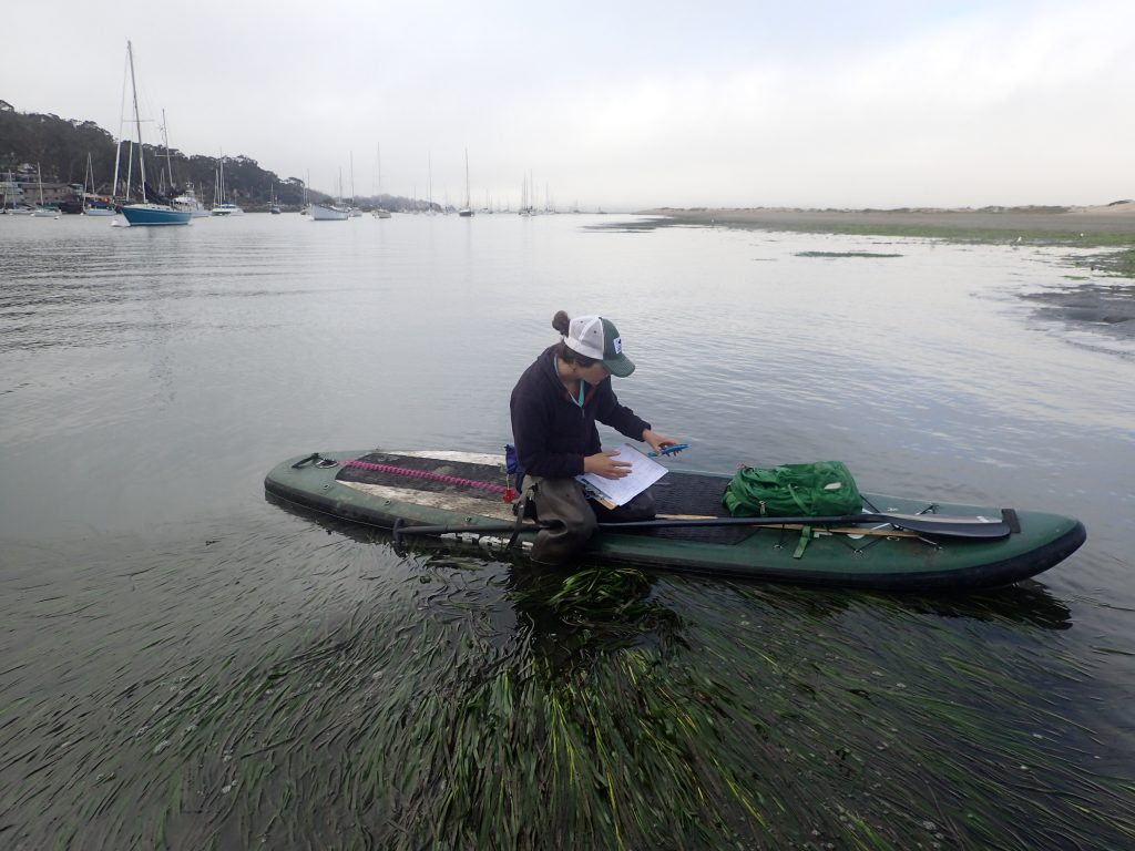 Monitoring Coordinator Karissa checks on eelgrass seeds from her floating desk.