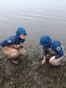 Angelica Kahler on left, and Tessa Wolf on right, observe a bat star in an eelgrass bed.