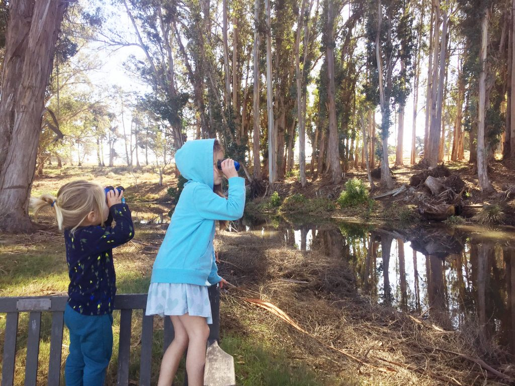 Sweet Springs Nature Preserve is a wonderful place to start bird watching.