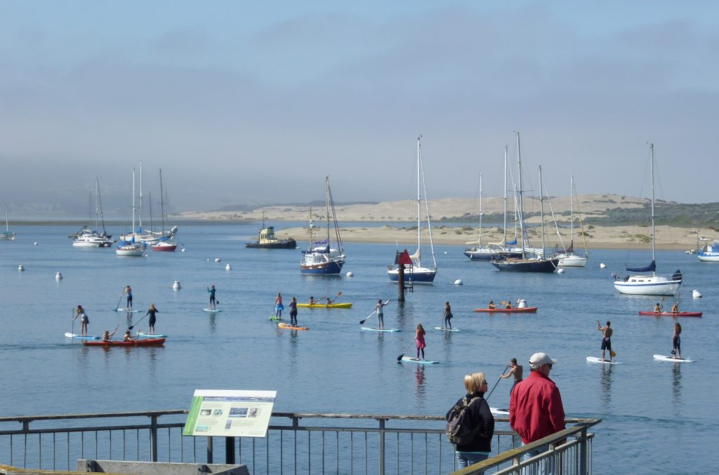 A busy summer day on Morro Bay.