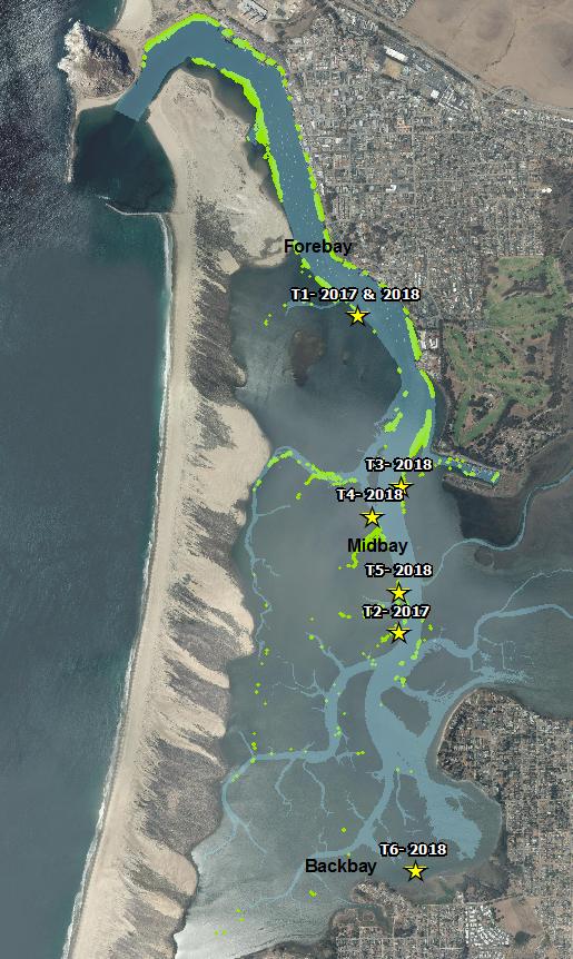 Map of eelgrass in Morro Bay showing transplant sites