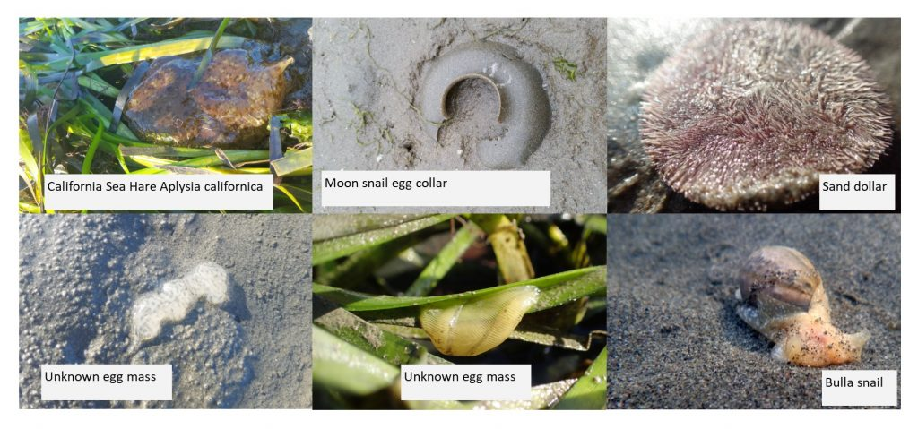 """Here are some photos of animals we saw. Can you identify any of the unknown egg masses? If you can, please send us a message at staff at mbnep dot org with the subject line """"Egg mass identification."""""""