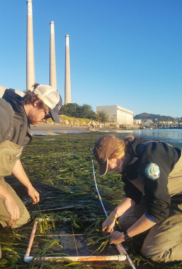 Watershed Stewards Program members Melia and Doug work on counting the number of eelgrass shoots within a 0.5m by 0.5m area.