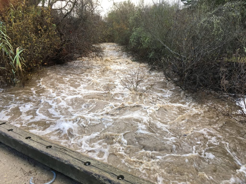 A picture from the bridge at our monitoring site on Canet Road, overlooking Chorro Creek. What a difference a week and some good rain storms will do!