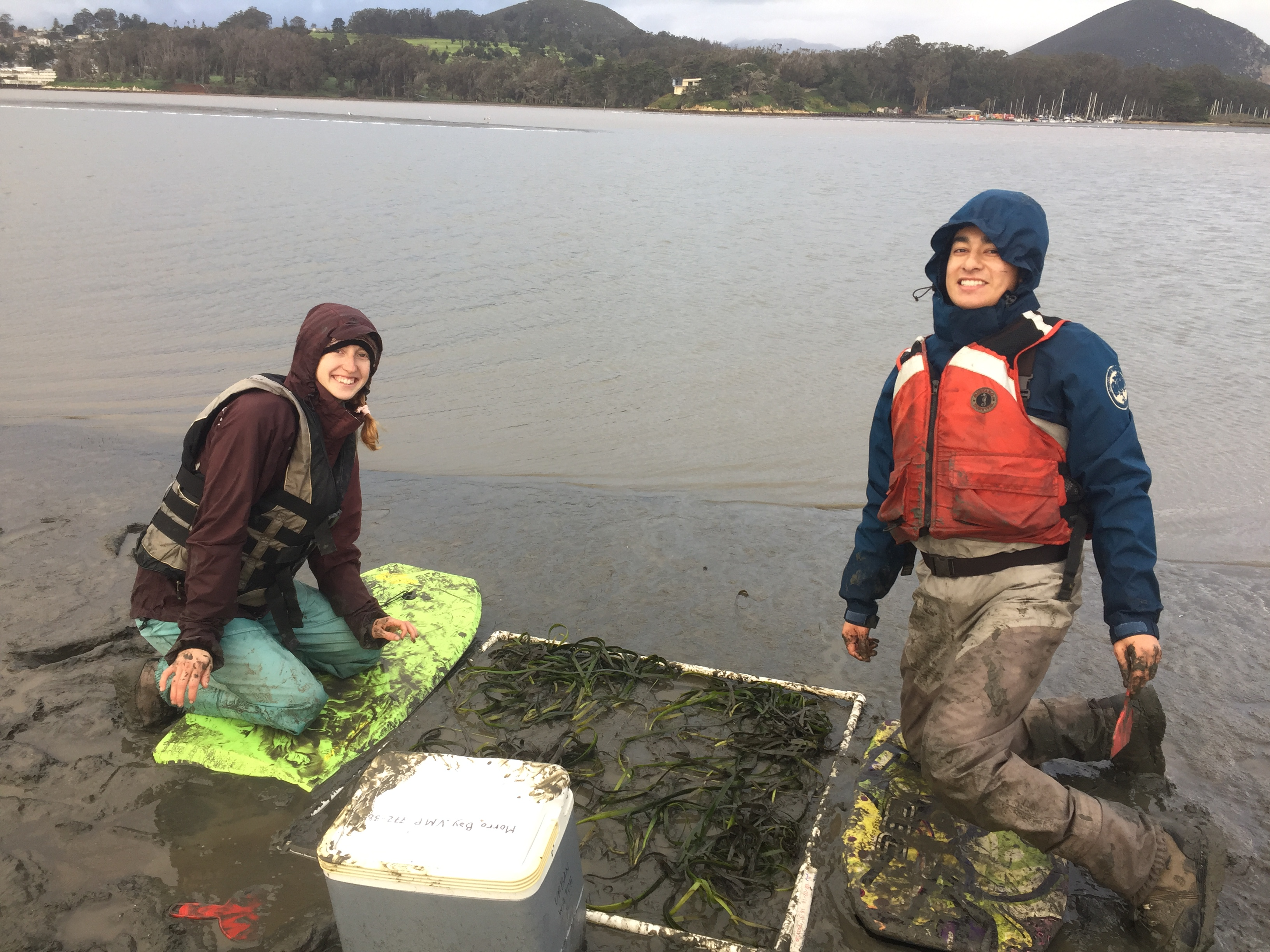 Two participants replant the harvested eelgrass into a one-square-meter plot.
