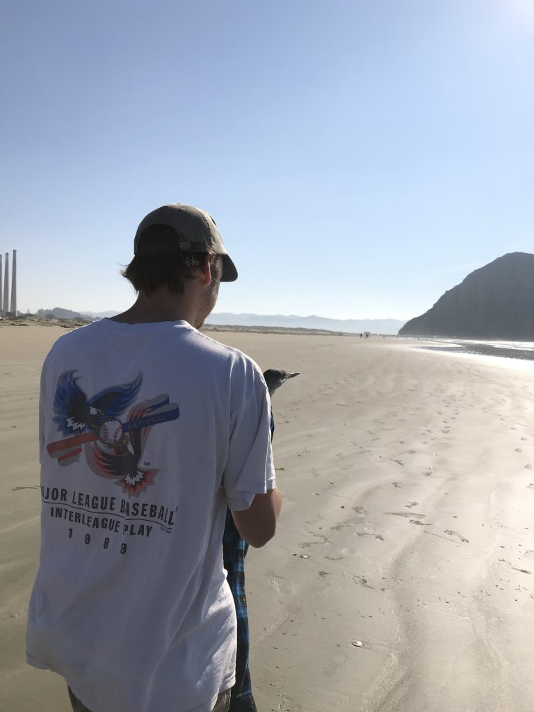 Liam Mora, a Cal Poly Junior majoring in Mechanical Engineering, carries the injured bird to Morro Rock parking lot. Photograph courtesy of Charlotte Ross.