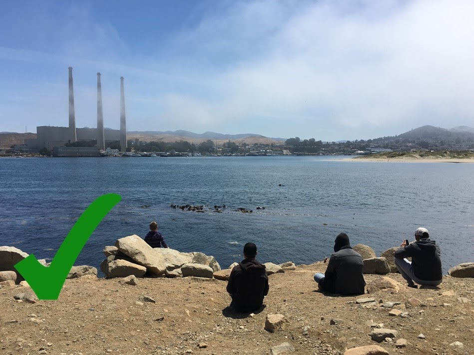 observers sit quietly and watch sea otters from the shore