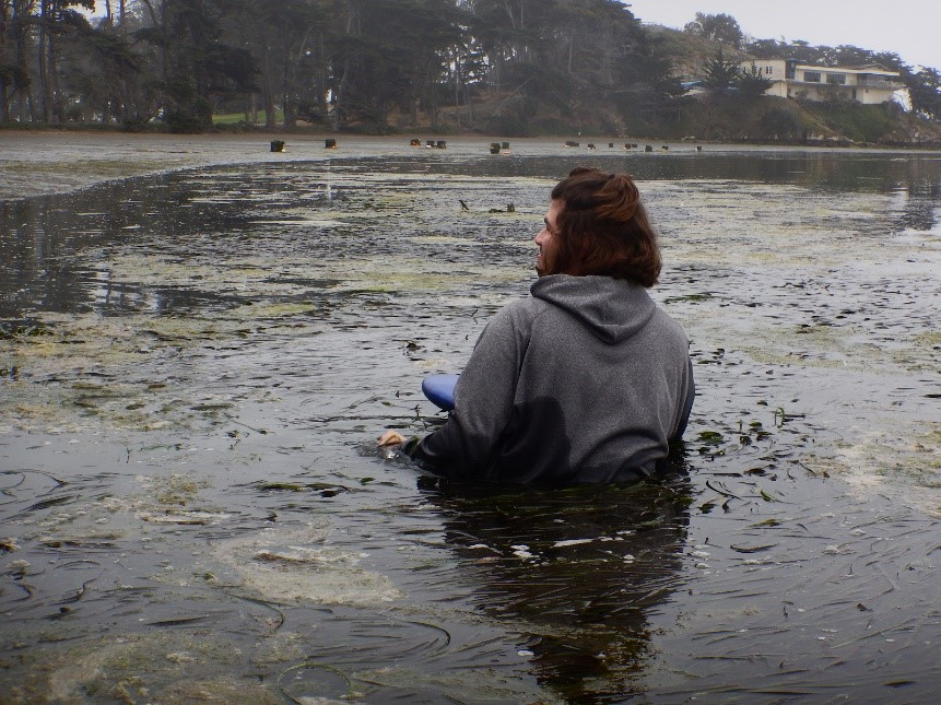 Here we've got one of our enthusiastic Marine Microbiology students taking a bit of a swim while collecting eelgrass samples!
