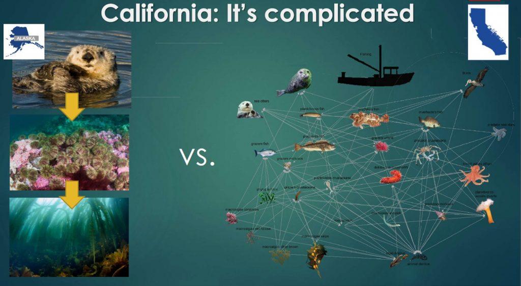 Figure that describes California coast food webs.