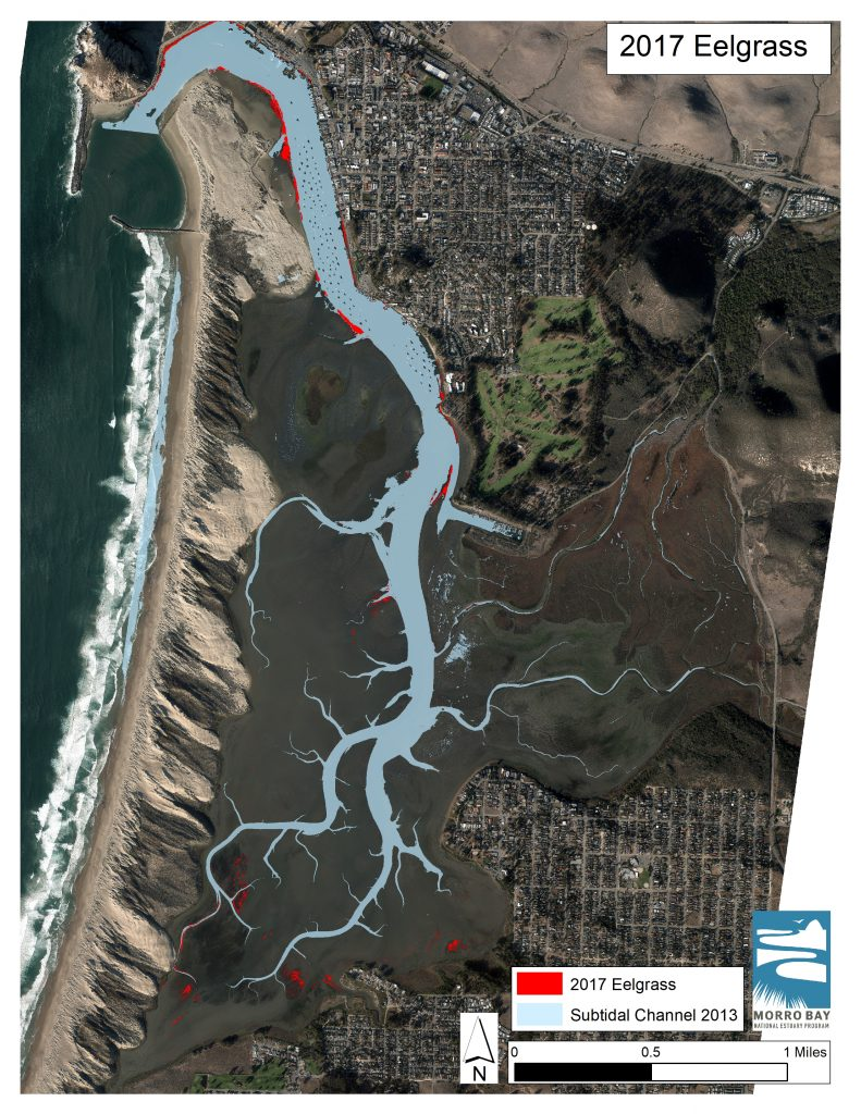 Map of eelgrass extend in Morro Bay.
