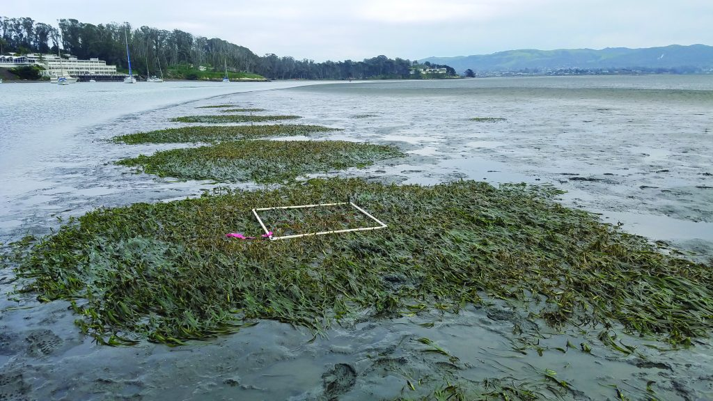 Eelgrass - plot 2yafter