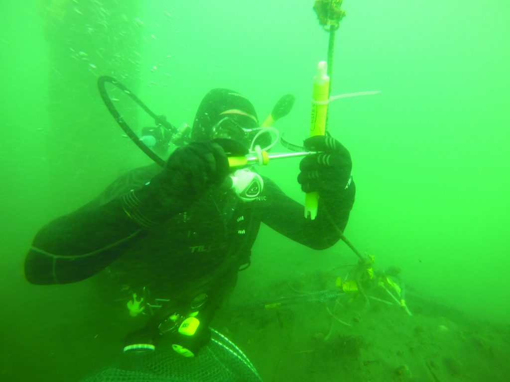 Edwin Rainville helps install sensors in the middle of the bay near Windy Point. Along with sensors near the Coast Guard station and the oyster farms, the data helps track water quality conditions throughout the bay.