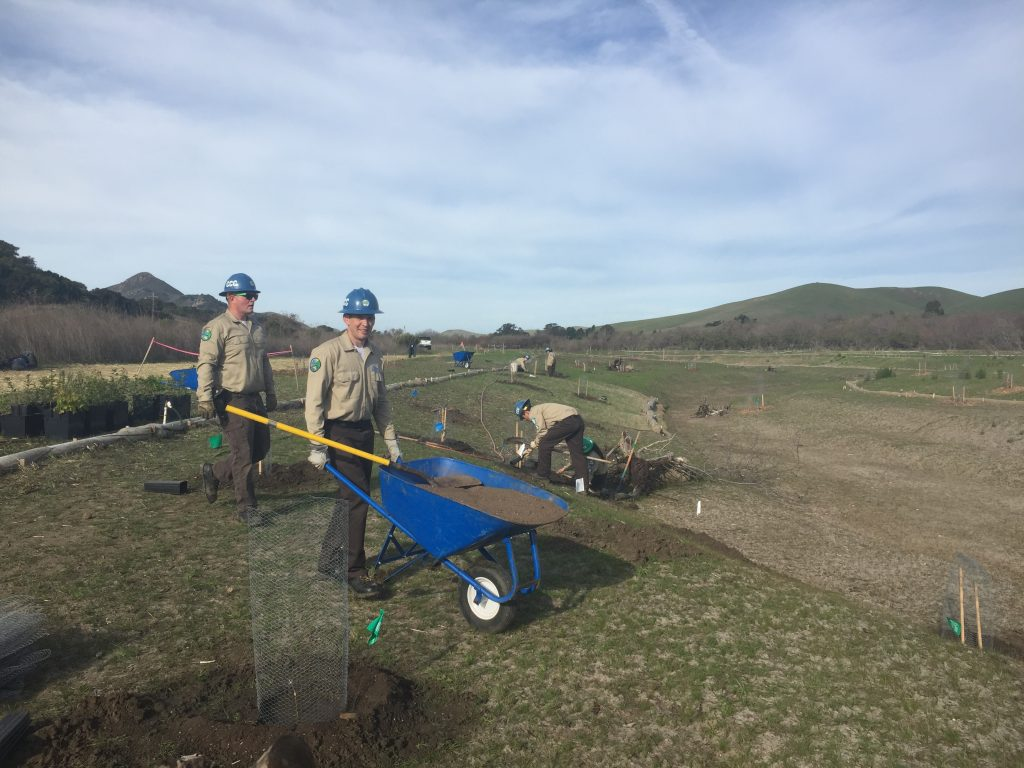Native Planting Growing - California Conservation Corps