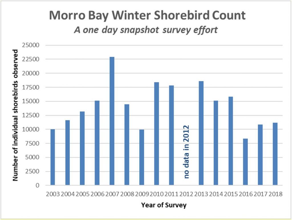 Morro Bay Winter Shorebird Count