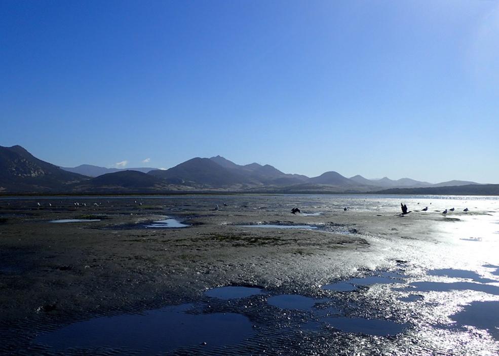 Mudflat, morro bay national estuary program