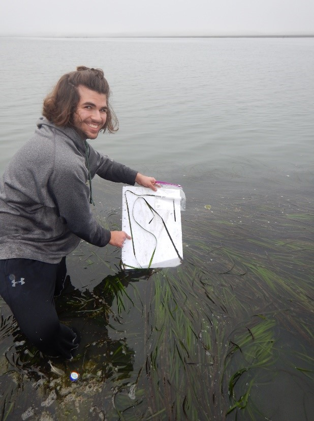 Student Eelgrass Collection