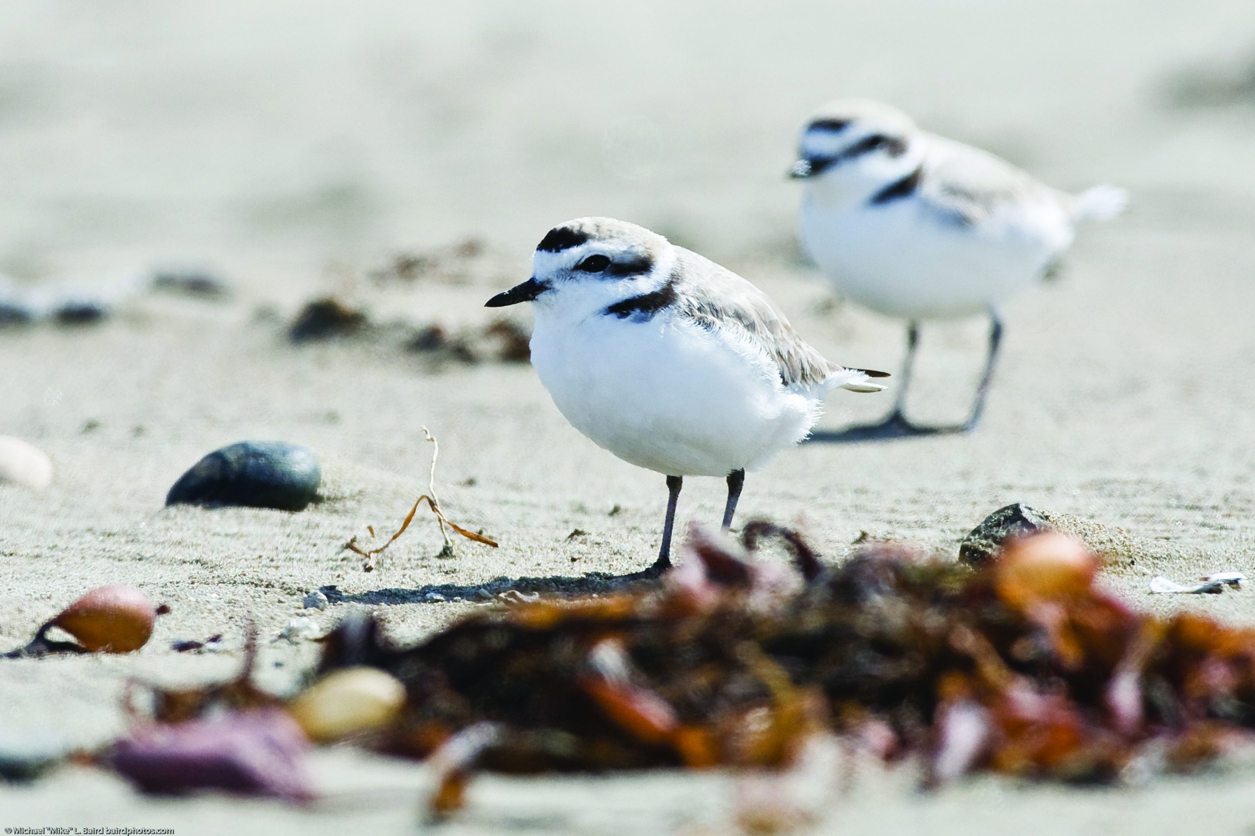 Are bird populations that depend on the bay and surrounding lands stable?