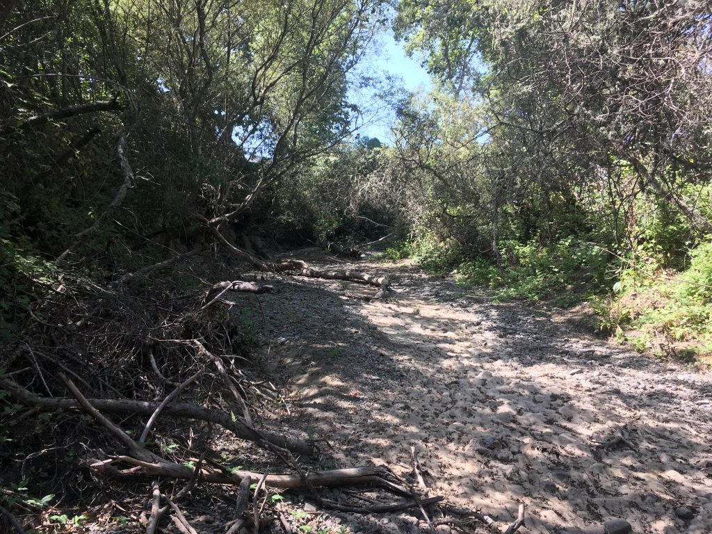 Los Osos Creek at LOVR during a period absent of surface flow.
