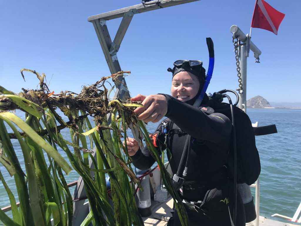 Tenera Environmental staff plant subtidal eelgrass in spring of 2020.