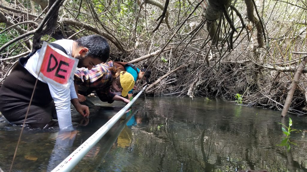 Staff and volunteers collect data on the habitat available for bugs and fish. The data will be used to calculate the bioassessment survey results for this section of the stream.