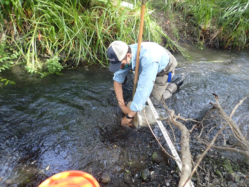 Blake scrubs the rocks and stirs up the bottom of the creek in the area in front of the D-frame kick net to collect a macroinvertebrate sample, all the while maintaining social distance and wearing a mask.