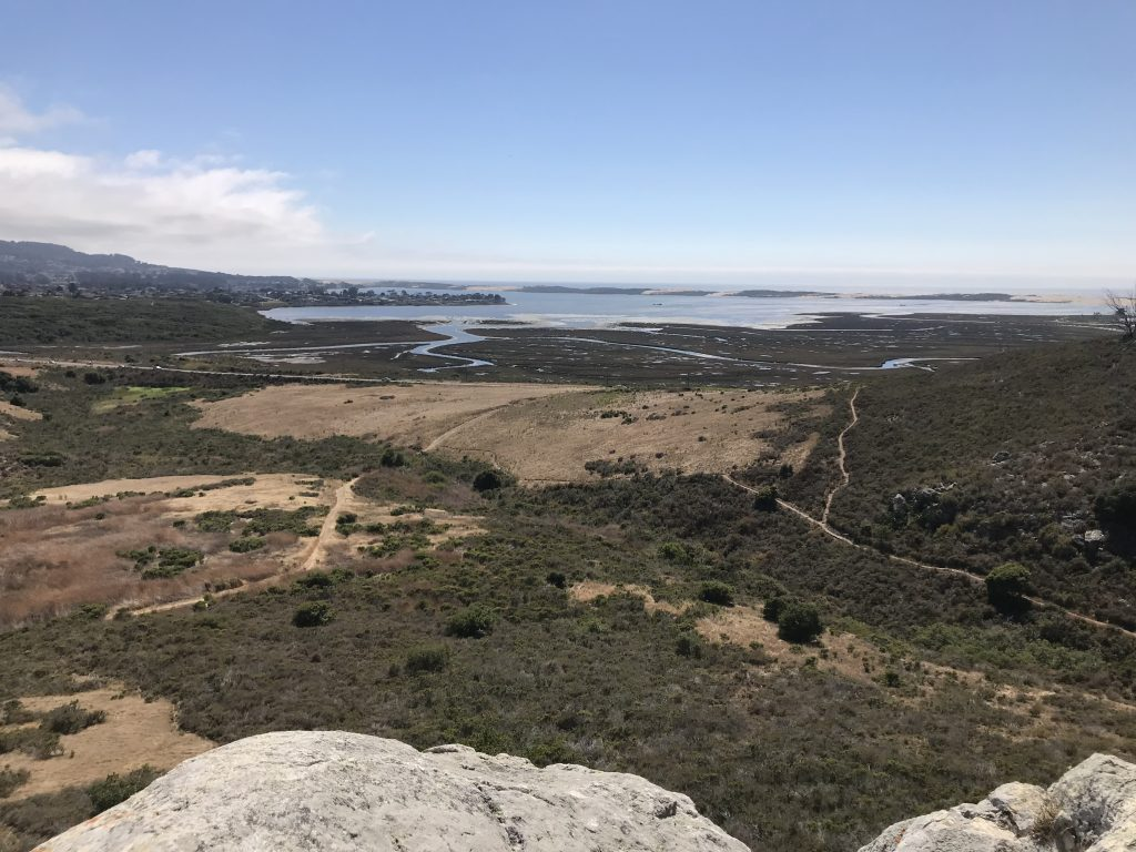 The Morro Bay estuary as seen from upper Morro Bay State Park.