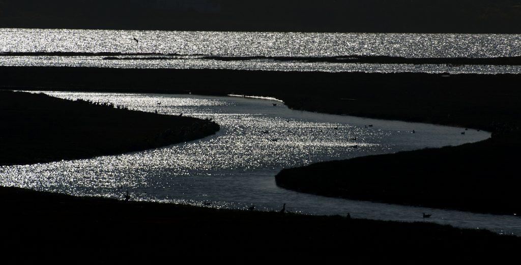 Estuary Channels