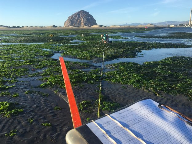 Monitoring eelgrass at a site near Morro Rock in December 2020.