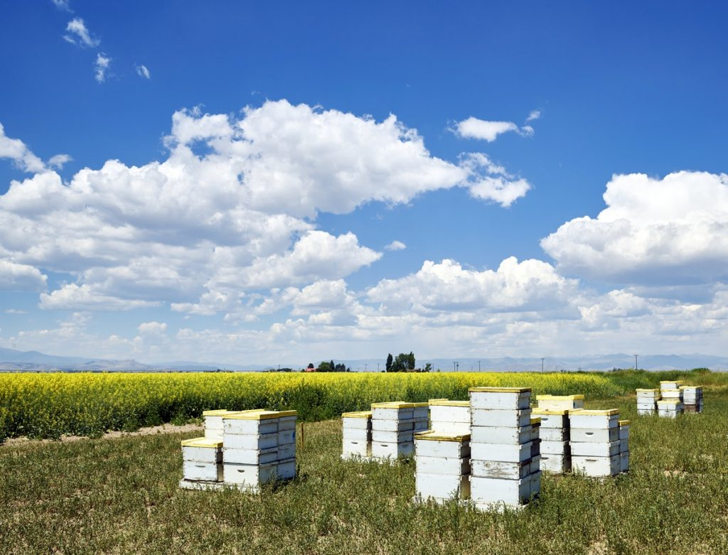 Boxes containing bees, for pollation, beside a field in Rio Grande County, Colorado - Original image from Carol M. Highsmith's America, Library of Congress collection. Digitally enhanced by rawpixel.
