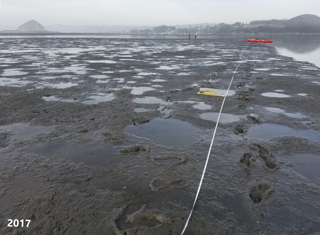 This photo shows an eelgrass monitoring site from 2017. No eelgrass was recorded during this survey.