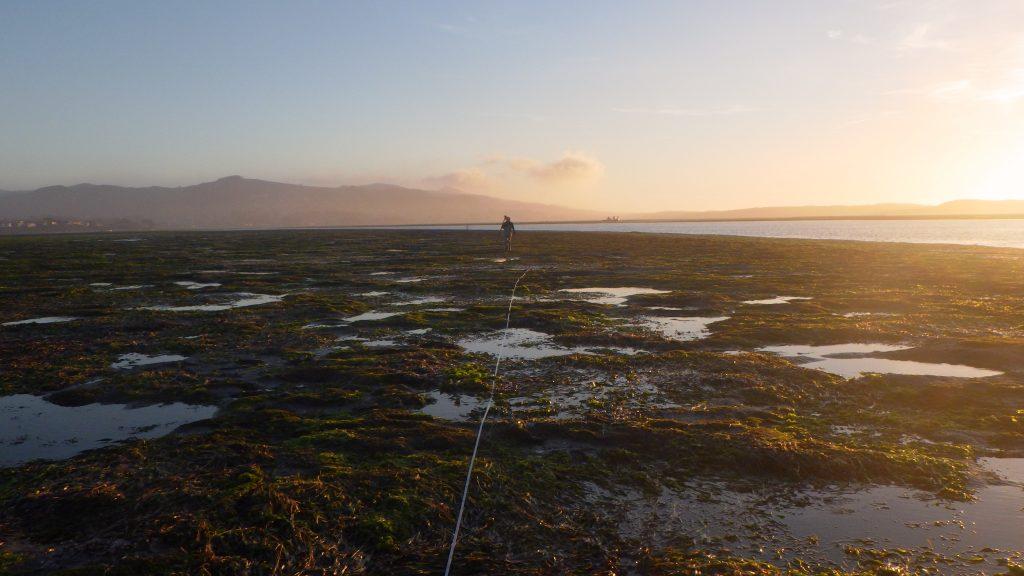 Sunset monitoring eelgrass in Morro Bay.