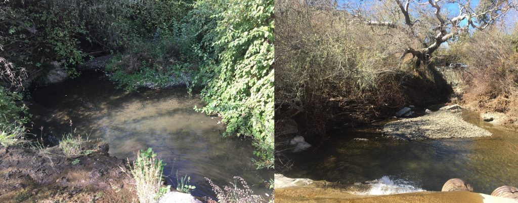 One monitoring site near Clark Valley Road in Los Osos shows new sediment deposition after January's high flows.