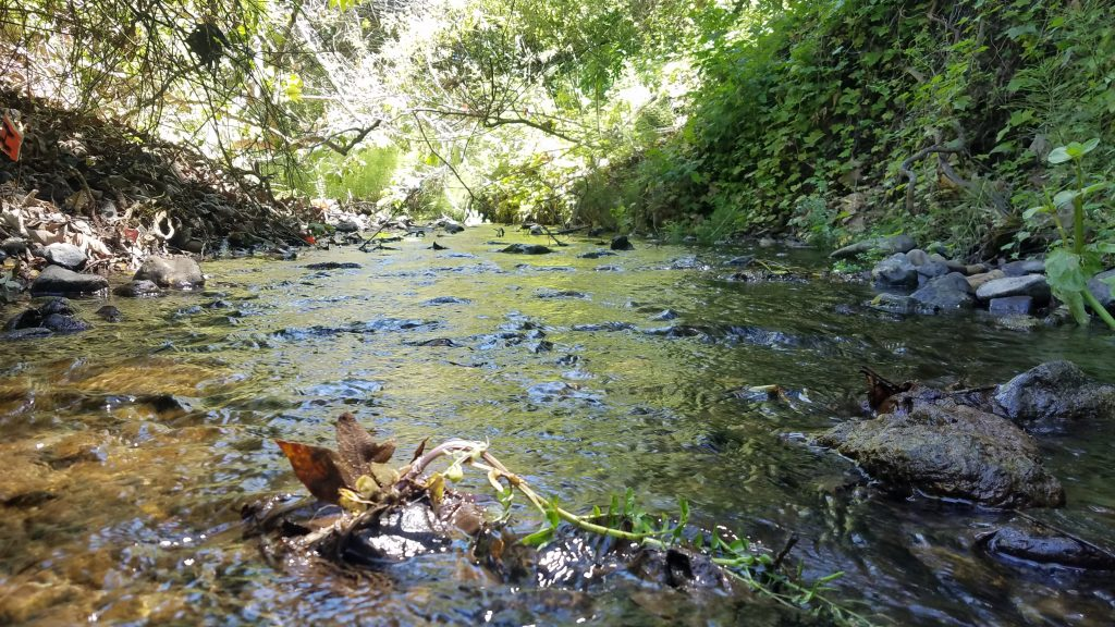 Low flow in our local creeks has fast tracked bioassessment season planning. Estuary Program staff will begin conducting surveys in mid-April, nearly a month earlier than usual.