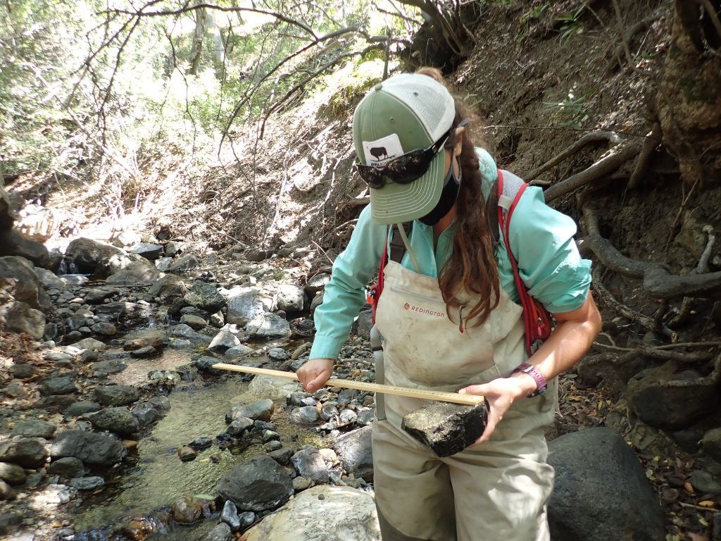 Monitoring Projects Manager, Karissa, measures the intermediate axis of a cobble during substrate classification.