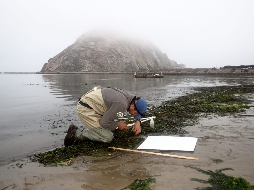 Ryan, a fisheries technician for the AmeriCorps Watershed Stewards Program, assists with monitoring at Coleman Beach