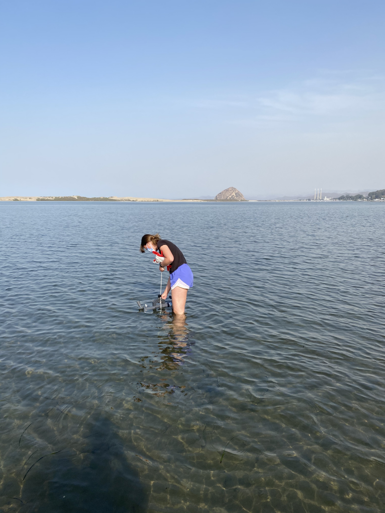 A student researcher wades into the water to collect a sample using a Niskin bottle.