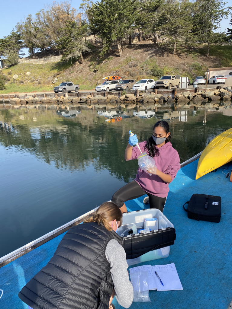 Student researchers collect water samples from a dock in Morro Bay. These samples will be tested in the chemistry lab. Photograph courtesy of Dr. Emily Bockmon.