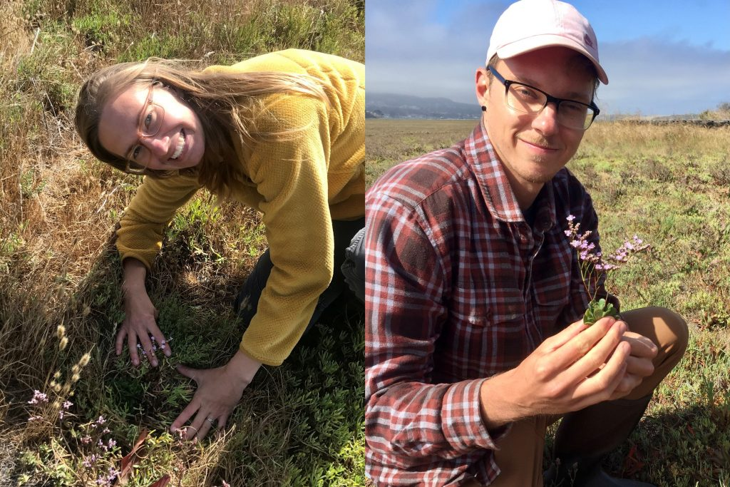 The monitoring training paid off! Carolyn and Bret have successfully identified and removed their first invasive sea lavender plants