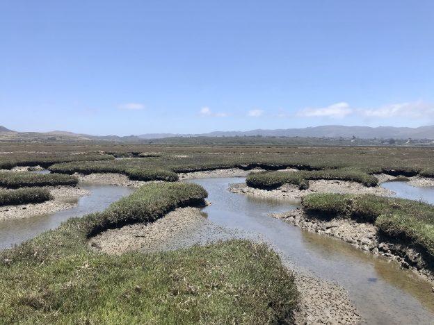Salt marsh channels