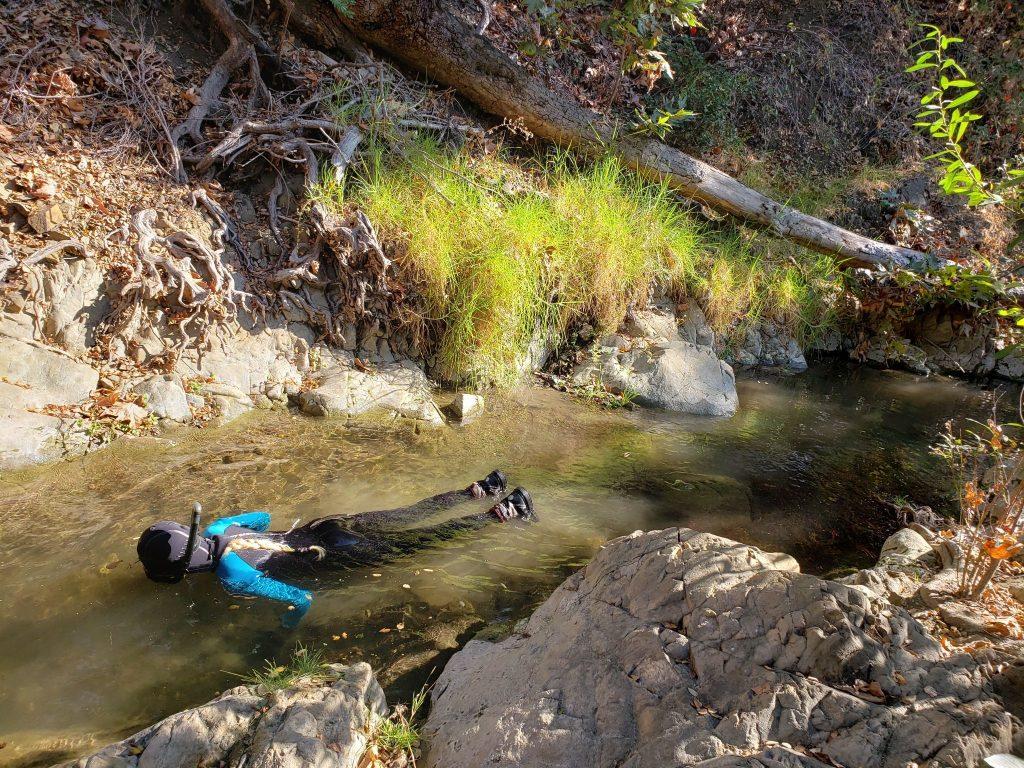 Natt conducts a snorkel survey on a section of San Luis Obispo Creek. Snorkel surveys give researchers a population estimate with minimal disturbance to the fish.